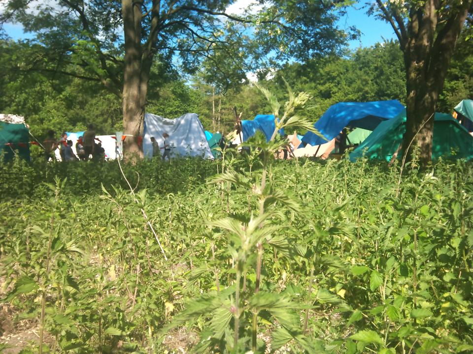 De f$#%^*g brandnetels op het ZePaKa 2011 kampterrein