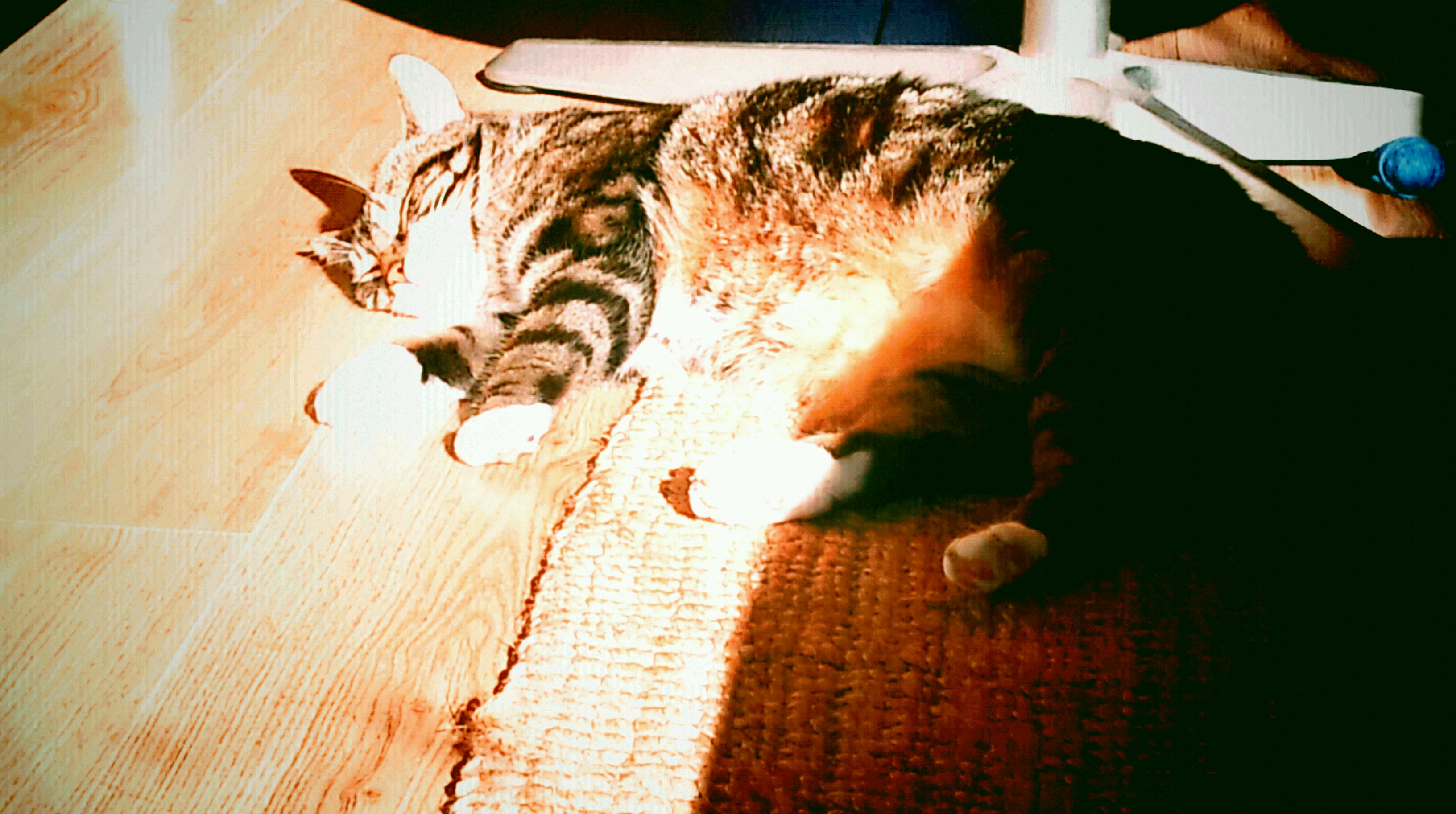 Schuif eens wat op Puk, kom er naast liggen! (16-10-2011 @ 15:05u)
