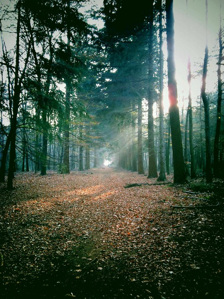 111113_heerlijk-zonnetje-door-de-bomen-van-de-kaapse-bossen
