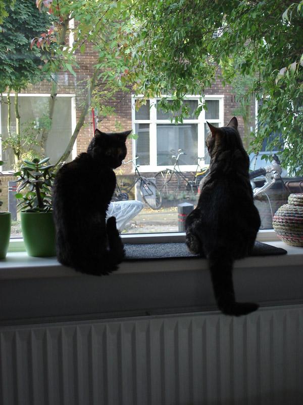 Suki met Puk voor het raam